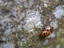 Cascadas Liffey - Muchos insectos apareándose